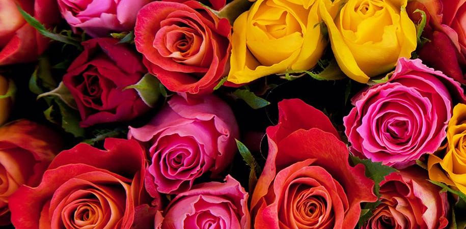Rosas Para Ocaciones